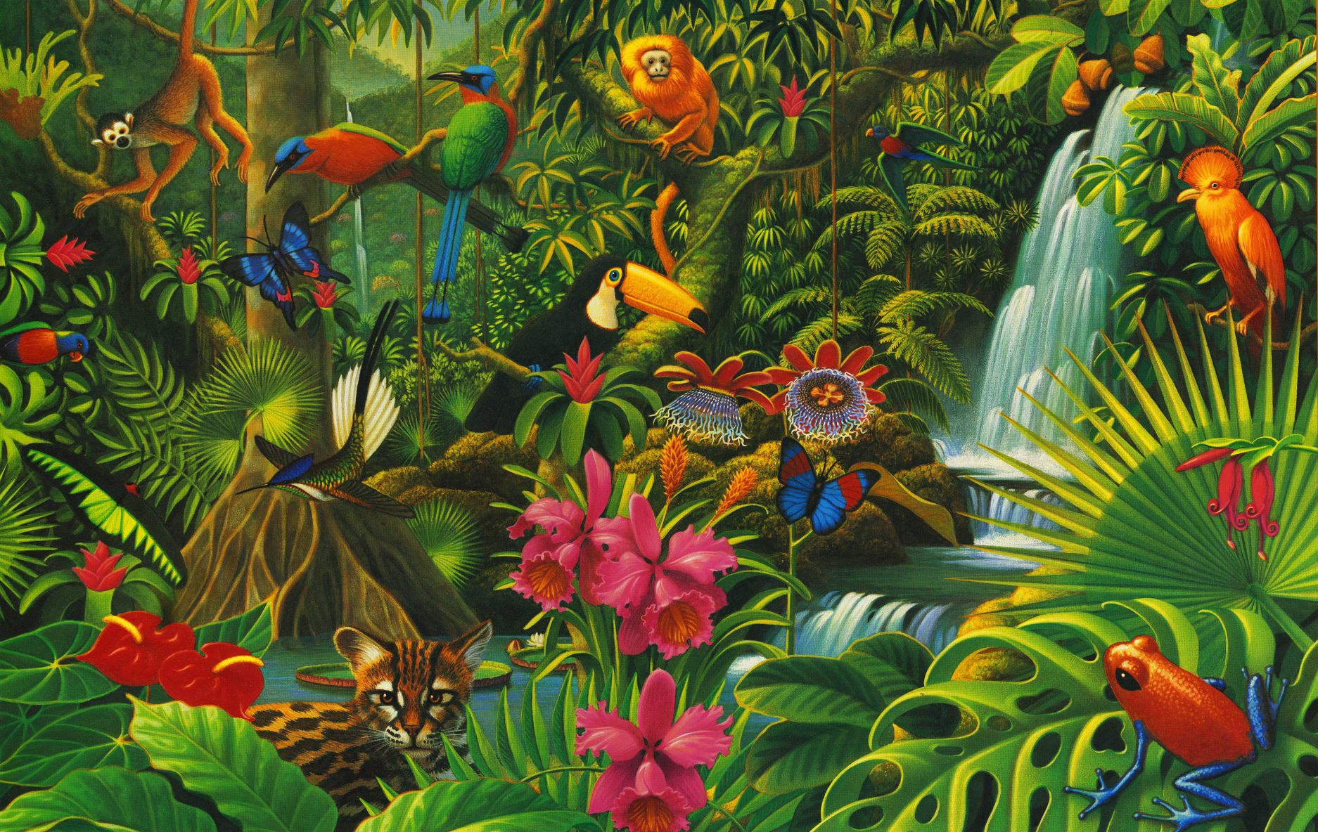 lelandklanderman-rainforest.jpg